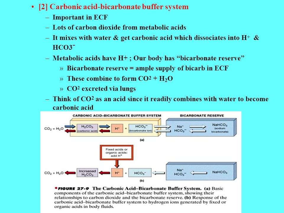 [2] Carbonic acid-bicarbonate buffer system